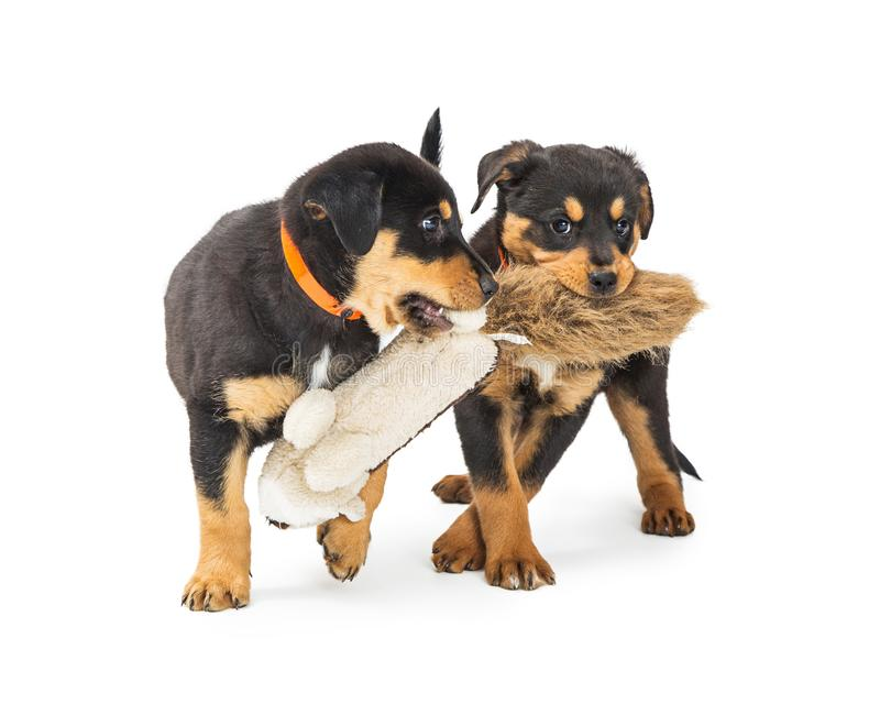 Two Puppies Playing With Stuffed Toy stock photo