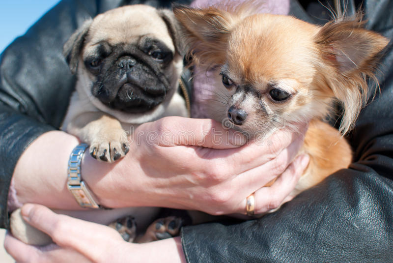 Two puppy's stock photography