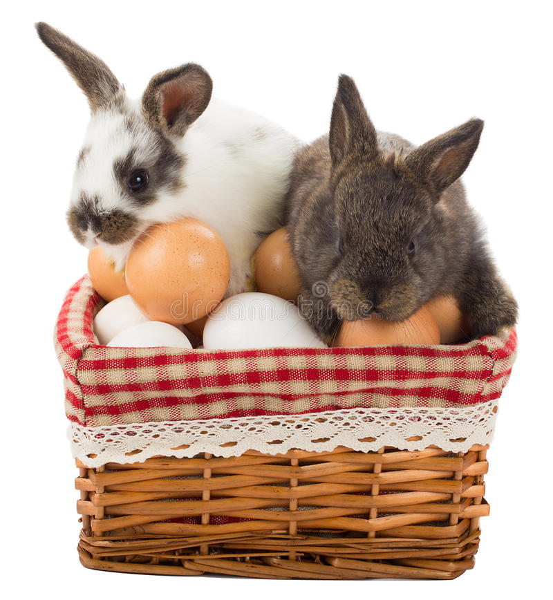 Two rabbits in the basket with eggs royalty free stock photo