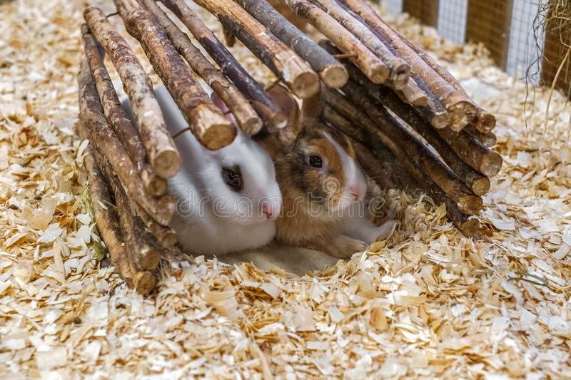 Two Rabbits For Sale At The Animal Market stock images
