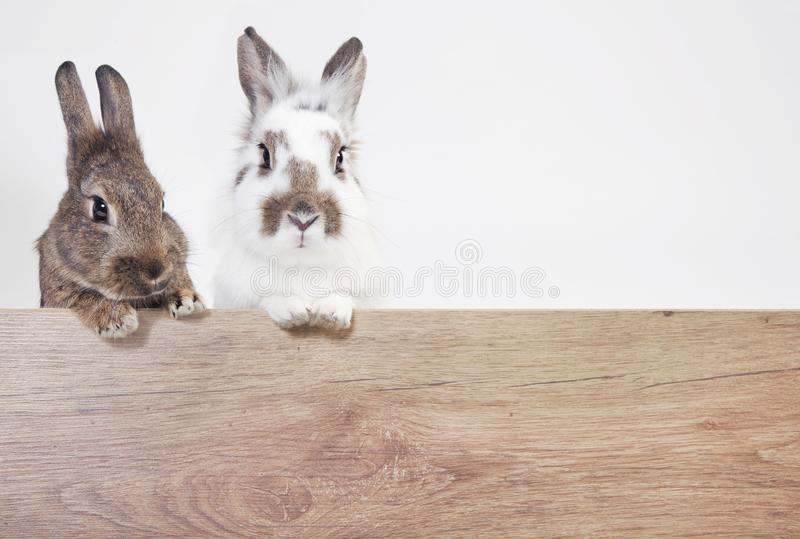 Two rabbits copy space. Two rabbits on a wooden billboard, isolated with white background royalty free stock photography