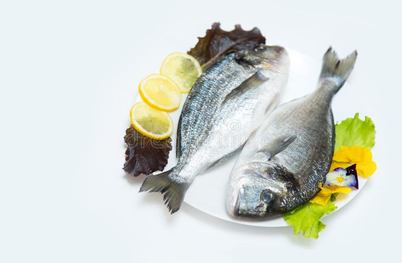 Two raw fresh dorado fish with spices and lemon on a white table. Two raw fresh dorado fish with spices and lemon in a plate before cooking on a white table royalty free stock photo