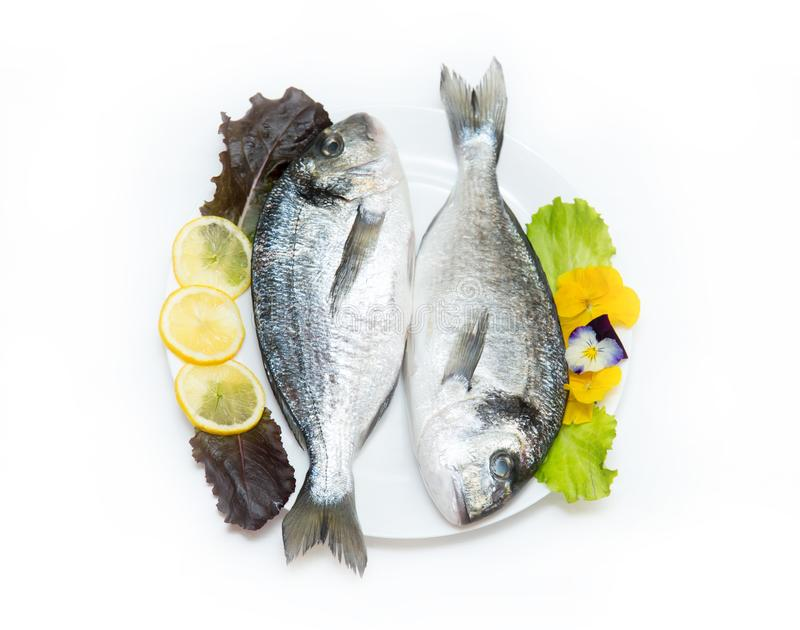 Two raw fresh dorado fish with spices and lemon on a white table. Two raw fresh dorado fish with spices and lemon in a plate before cooking on a white table stock photography