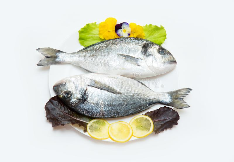 Two raw fresh dorado fish with spices and lemon on a white table. Two raw fresh dorado fish with spices and lemon in a plate before cooking on a white table stock images
