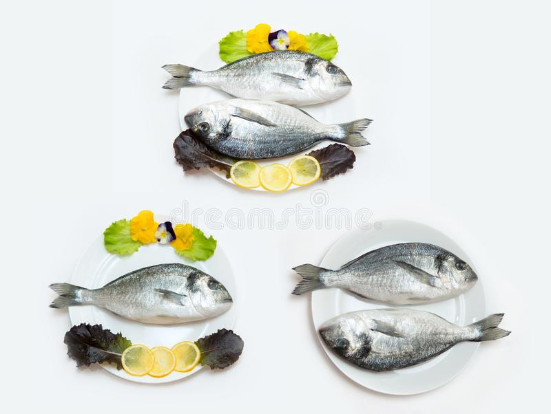 Two raw fresh dorado fish with spices and lemon on a white table. Two raw fresh dorado fish with spices and lemon in a plate before cooking on a white table stock photos