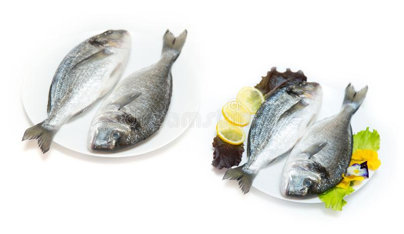 Two raw fresh dorado fish with spices and lemon on a white table. Two raw fresh dorado fish with spices and lemon in a plate before cooking on a white table stock image