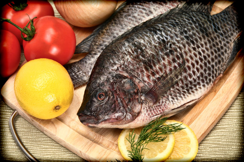 Two Raw Tilapia Fish in Vintage Style Photograph royalty free stock image