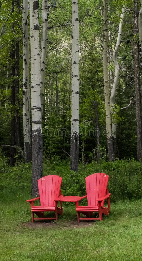 Red chairs and birch trees. Two red Adirondack chairs on a grass lawn with the white trunks of birch trees in the woods of Canada royalty free stock images