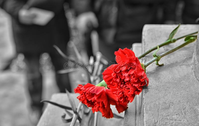 Two red carnations royalty free stock photography