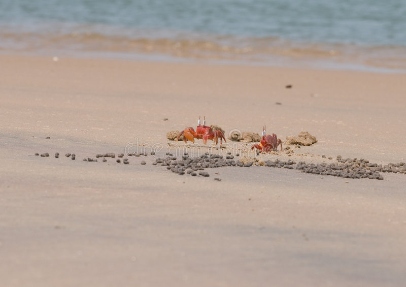 Two Red Crabs stock photo