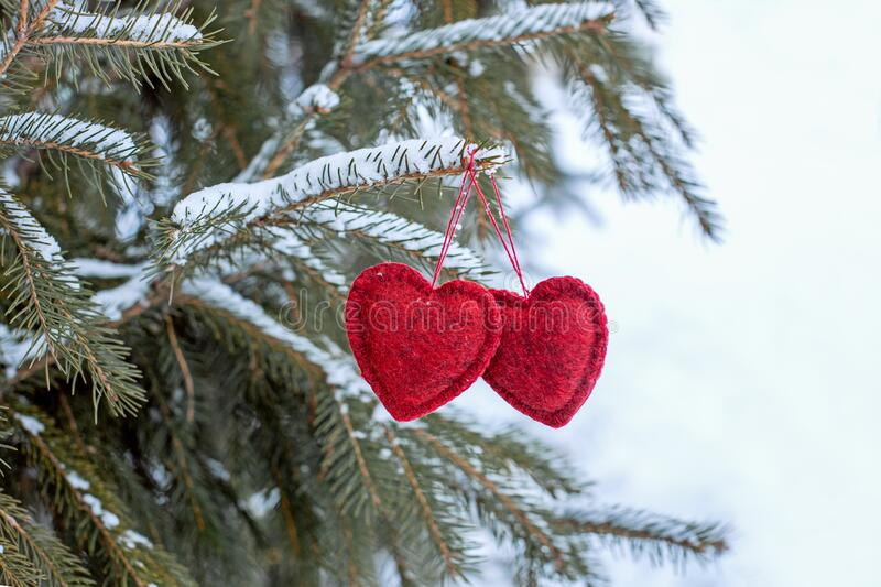 Two red hearts hanging on a branch of a Christmas tree, royalty free stock photo