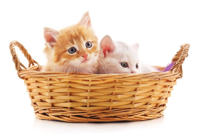 Two red kittens in a basket royalty free stock image