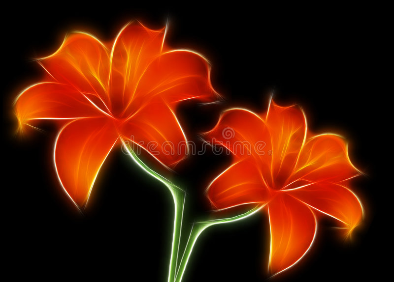 Two red lilies royalty free stock photography