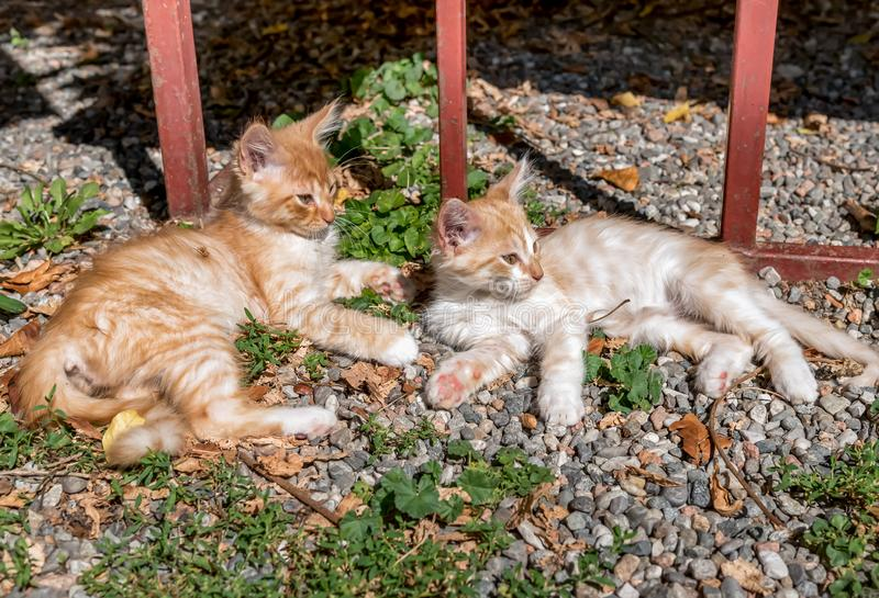 Two red little kittens on the ground in the garden stock images