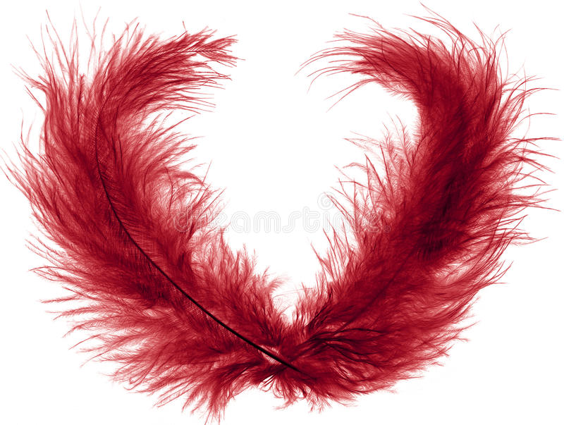 Two red plume. Beautiful red ostrich feather plume isolated on white background stock image