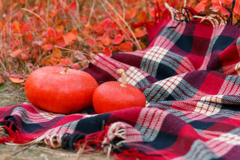 Two red pumpkins on a plaid. In the autumn park stock photos