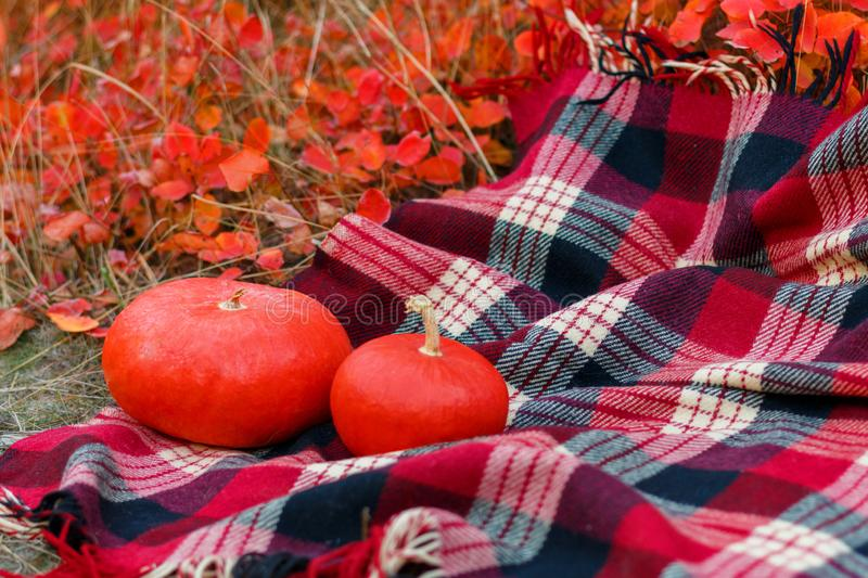 Two red pumpkins on a plaid. In the autumn park royalty free stock photos