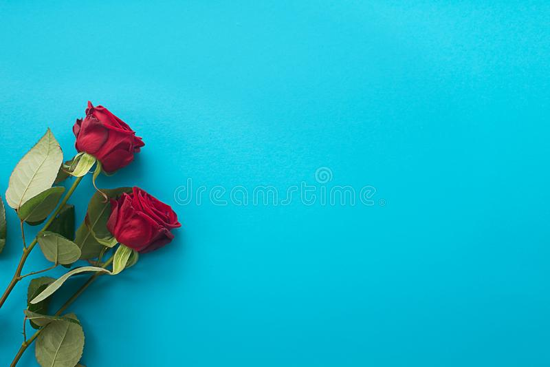Two red roses on a blue background stock photo