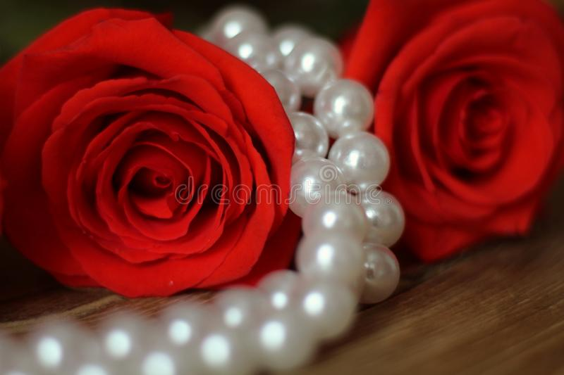 Between the two red roses lies a white pearl necklace on a wooden table brown. Macro. Roses right red and white pearl necklace lying wooden table brown. Macro royalty free stock image