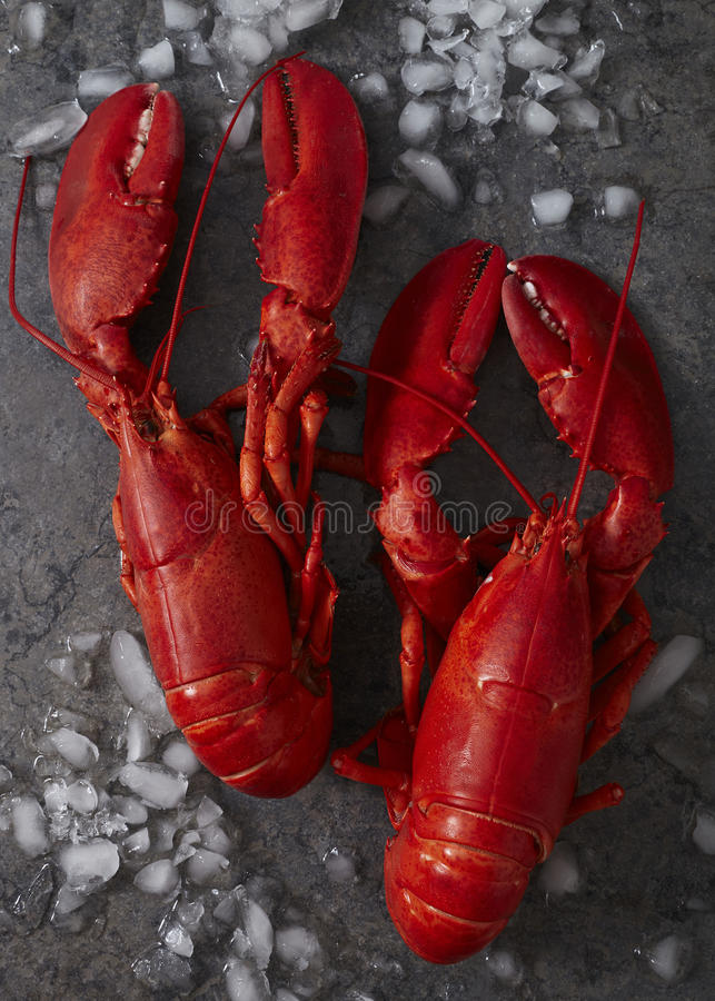 Two red steamed maine lobsters on ice stock image