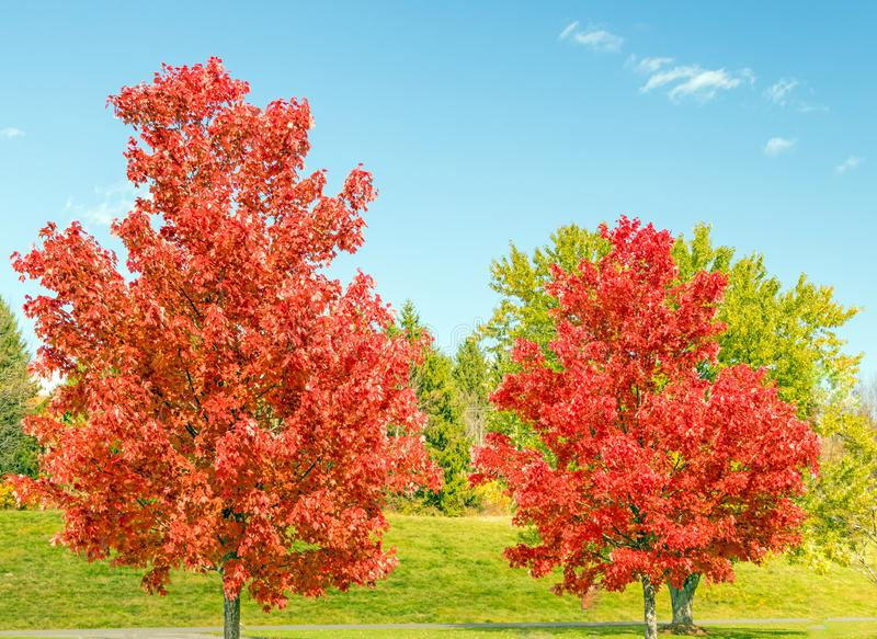 Red maple trees Lake Taghkanic State Park stock photos