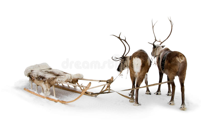 Download Two Reindeers Stock Photo - Image: 11976410