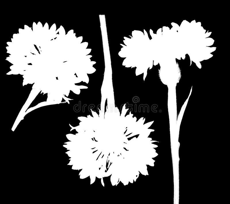 Two related salfa canal files carved by a cornflower flower in different angles. On a white background vector illustration