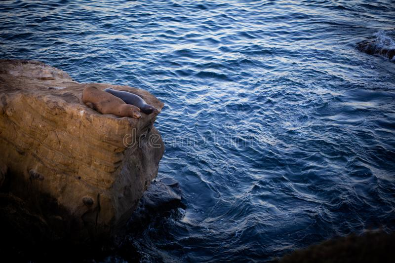 Two resting sea lions on the rock stock photos