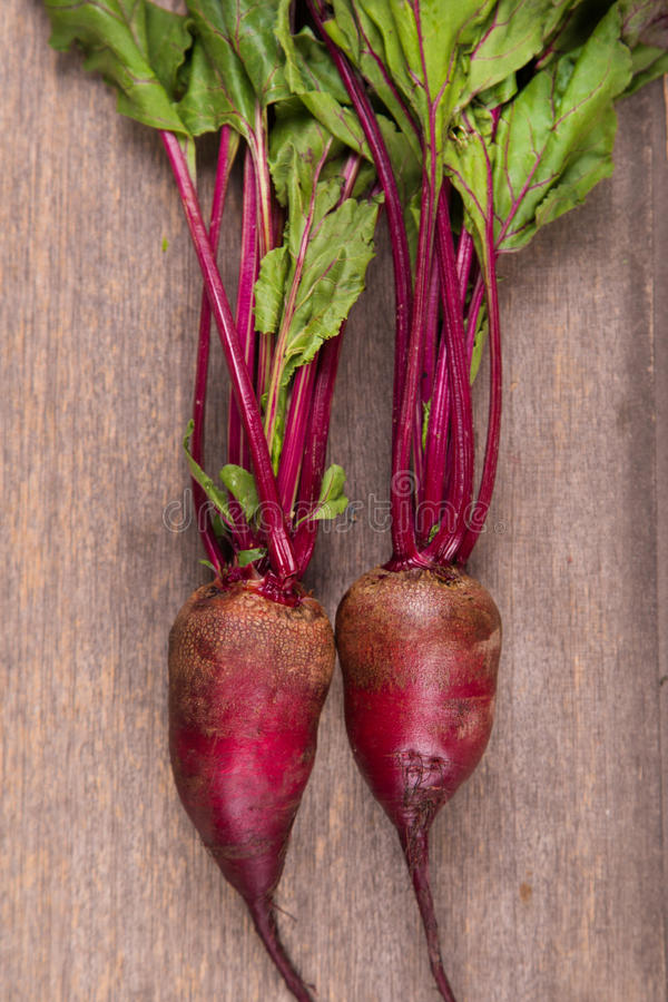 Two ripe beet. Two fresh ripe beet on wooden background in studio stock photography