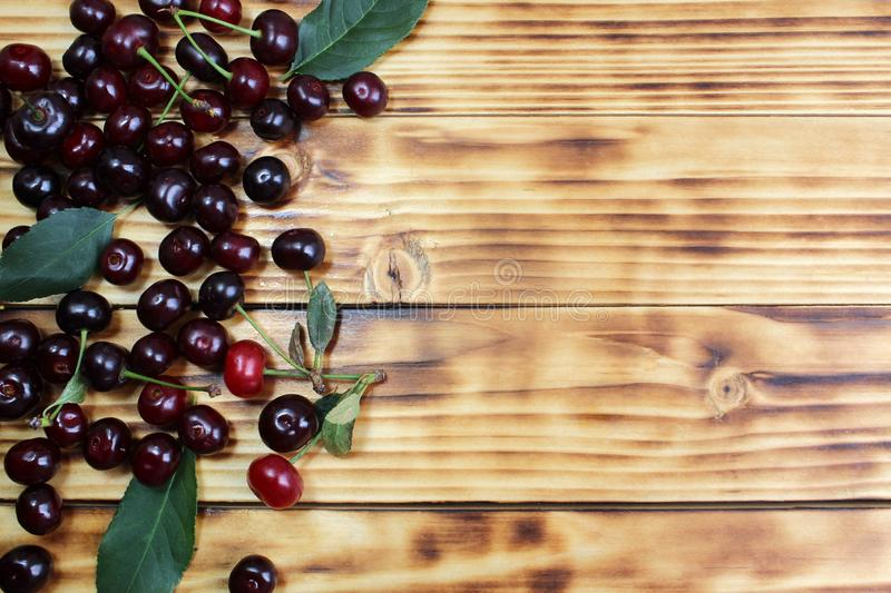 Two ripe cherries are hanging on a tree branch. Cherry, juicy, ripe, dark, burgundy, texture, scattered, leaves, summer, season, background picture, berry, sweet royalty free stock images