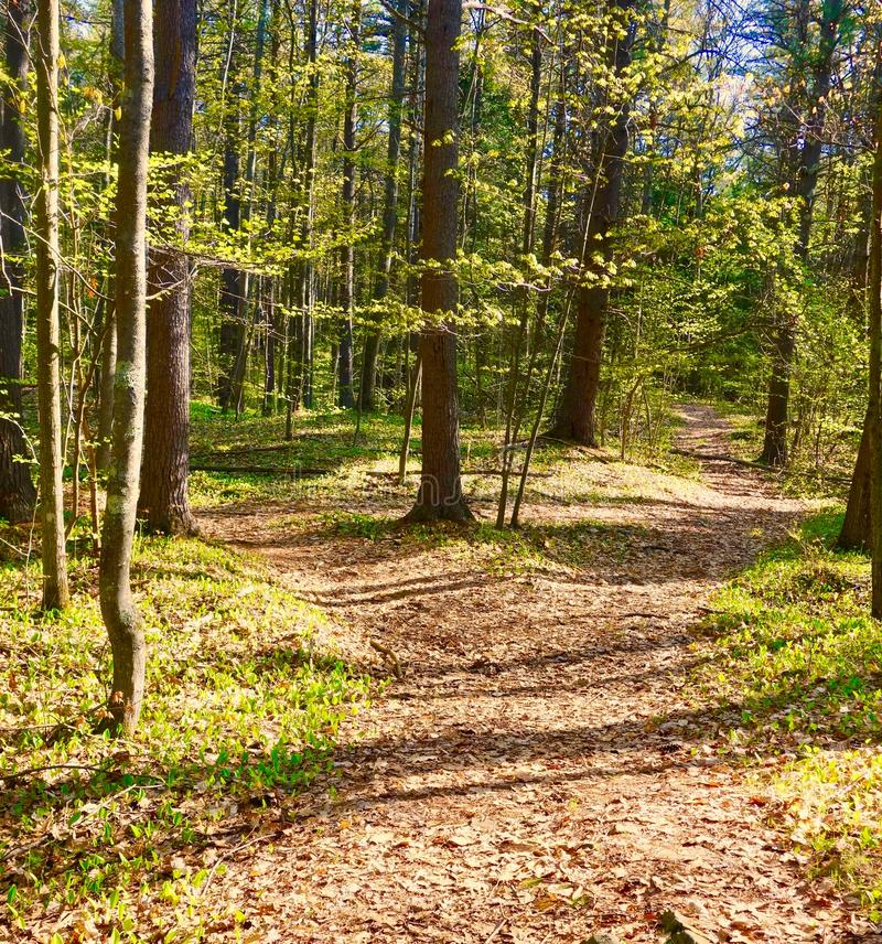 Two Roads diverged in a Wood and I took. The one less traveled by. A forest in early spring in Maine New England, vegetation beginning to grow on the ground stock photos