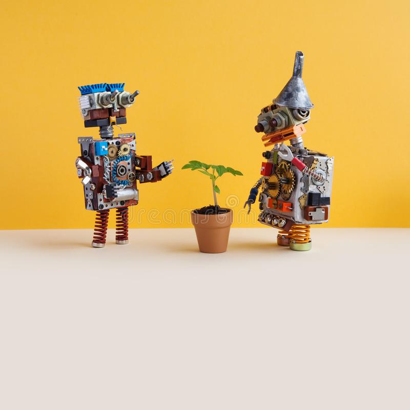Two robots explores a living green plant in a flower clay pot. Artificial intelligence versus organic life plant. Yellow royalty free stock photo