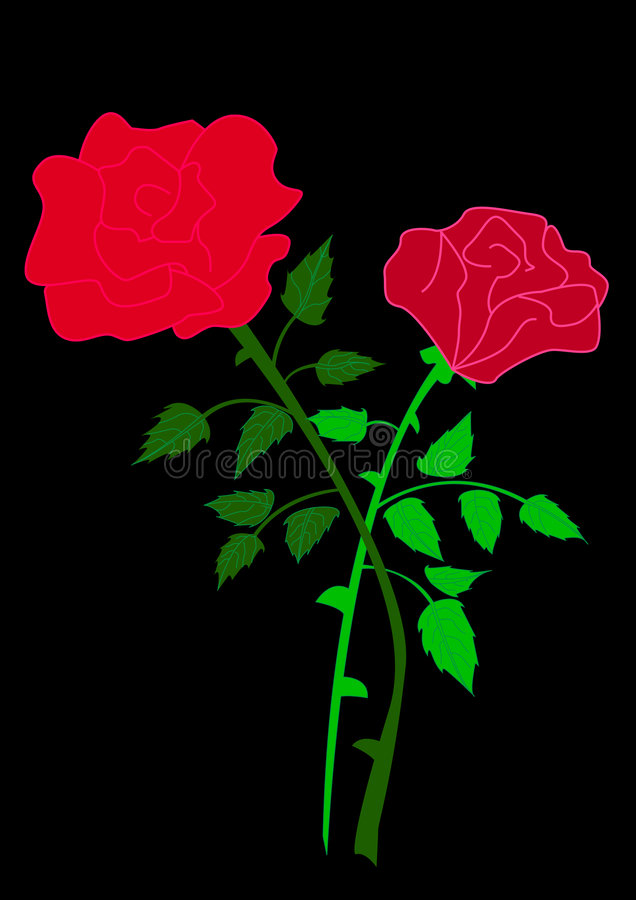 Download Two rose stock vector. Image of natural, isolated, passion - 7236164
