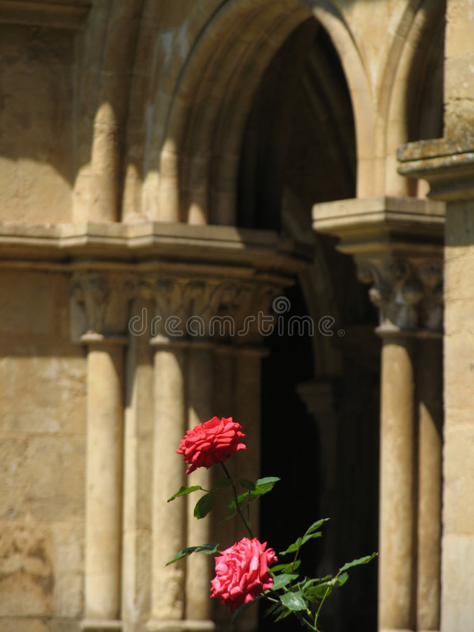 Download Two Roses stock image. Image of stone, portugal, historical - 187245