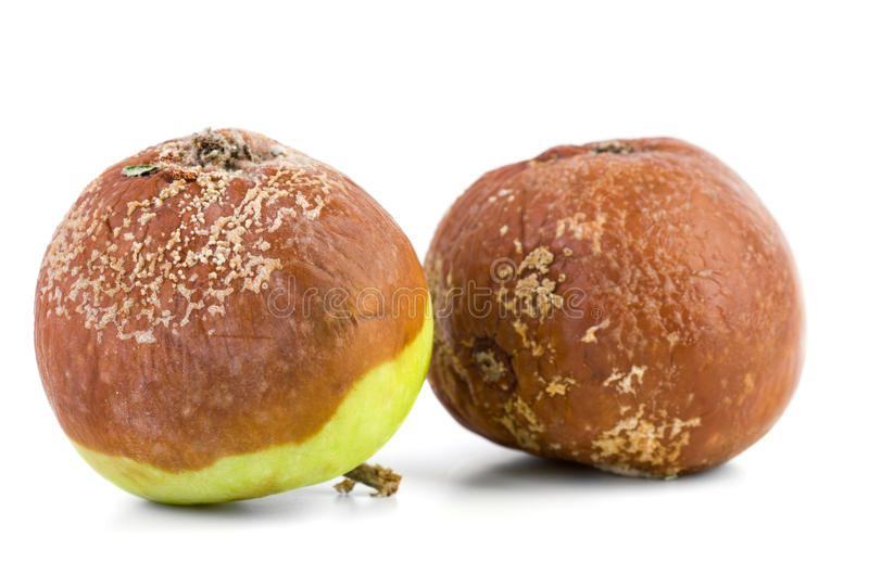 Two rotten apples. Isolated on the white background royalty free stock photos