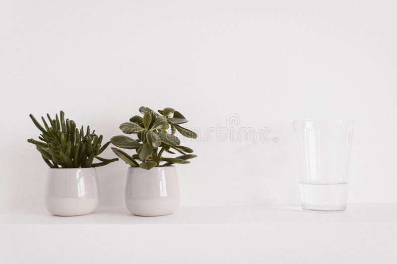Two Round Ceramic Potted Green Plants and Liquid Filled Clear Drinking Glass stock photos