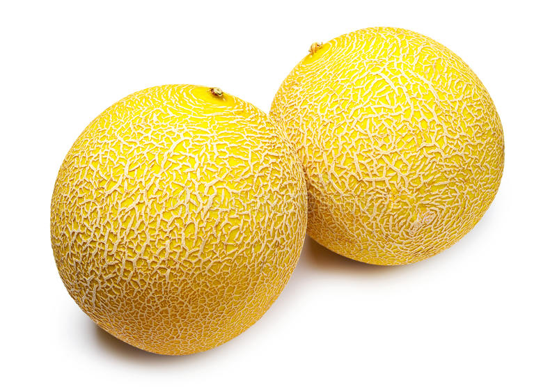 Download Two round melons stock photo. Image of melon, object - 25594386