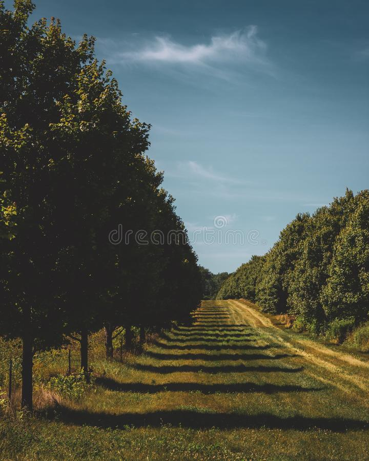 Two Rows of Trees. And clearing separating fields of crops in the farmland of LaPorte, Indiana, on a sunny summer day royalty free stock photos