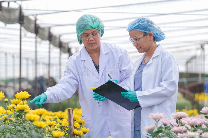Scientist women with lab gown and hair cover stand in front of multi-color flowers.smiling with the concept of good experiment. Two scientist women with lab gown royalty free stock photography