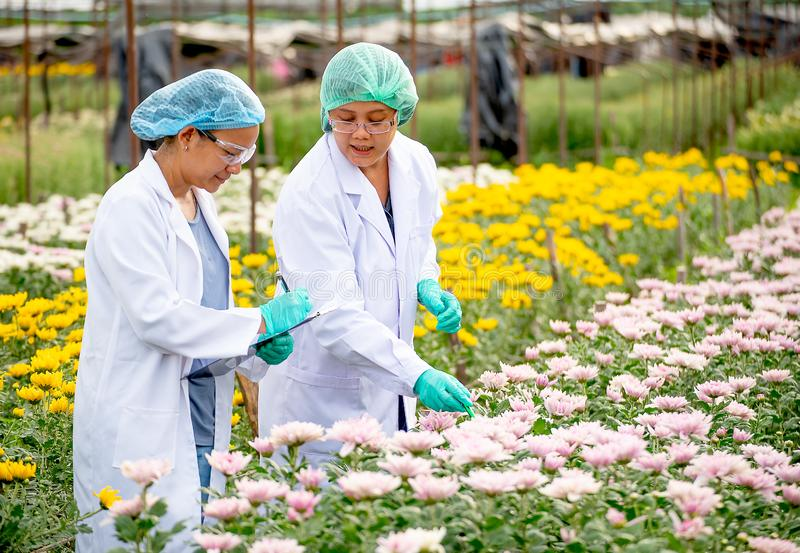 Two scientist women work together in experimental field of flower garden, one woman check the product and the other one record. Those result data stock image