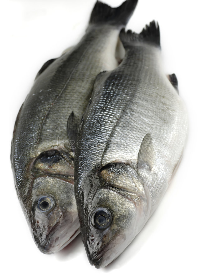 Two sea bass royalty free stock photography