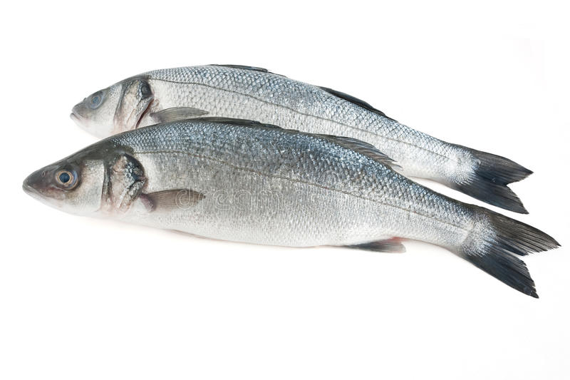 Two Sea Bass Isolated Stock Photos