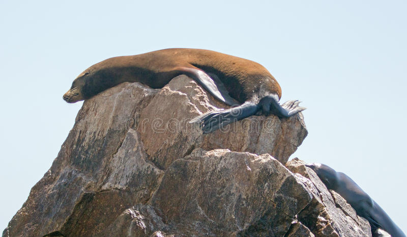 Two Sea Lions resting on Pinnacle rock at Lands End in Cabo San Lucas Baja Mexico royalty free stock images