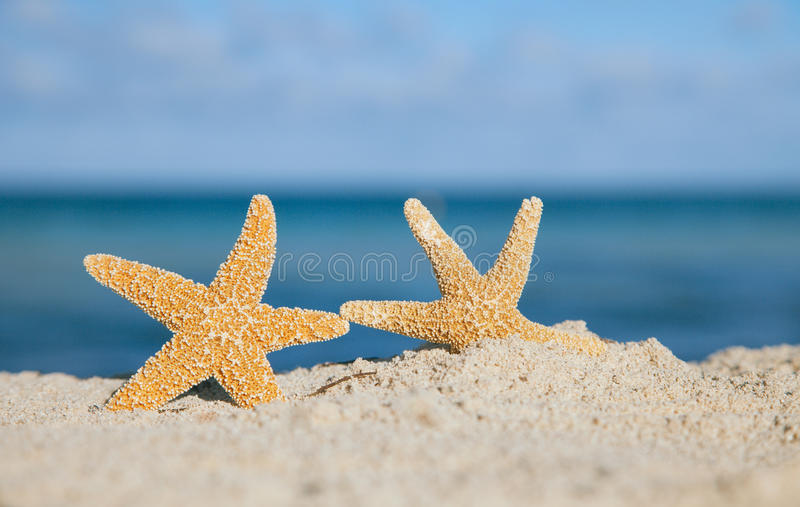 Download Two Sea Star Starfish On Beach Stock Photo - Image of close, clouds: 24463024