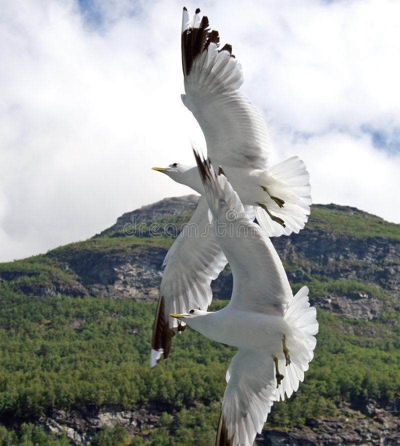 Free Two Seagulls Royalty Free Stock Image - 1464676