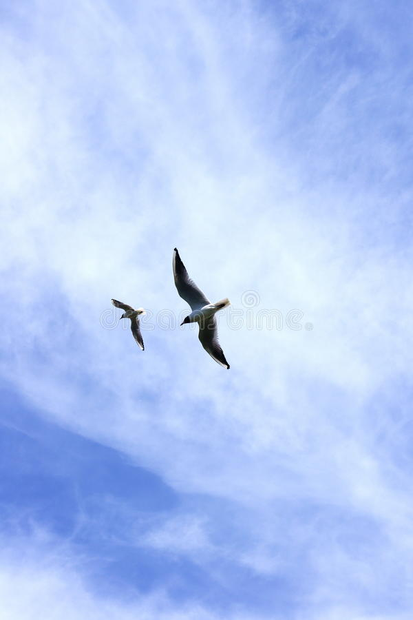 Download Two seagulls stock image. Image of bird, seagull, birds - 19757799