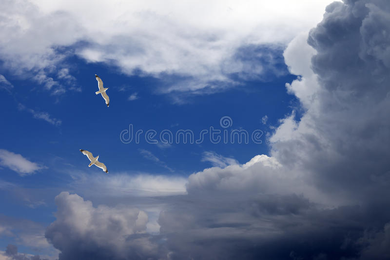 Download Two seagulls stock image. Image of high, beautiful, flight - 25548445