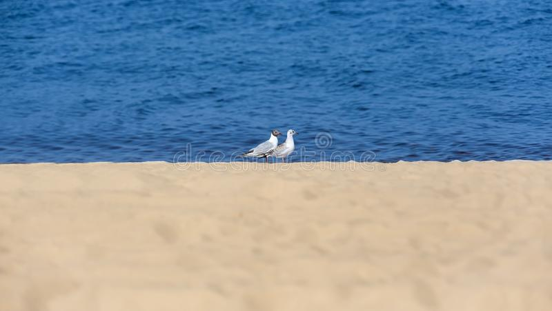 Two seagulls on the coast royalty free stock photography