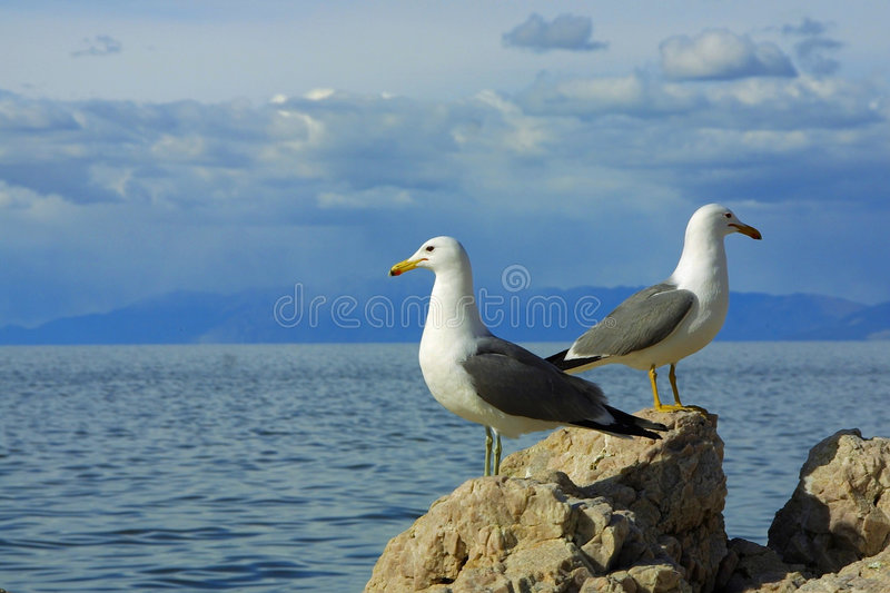Download Two Seagulls Facing Opposite Ways Stock Image - Image of ecosystem, landscape: 557745