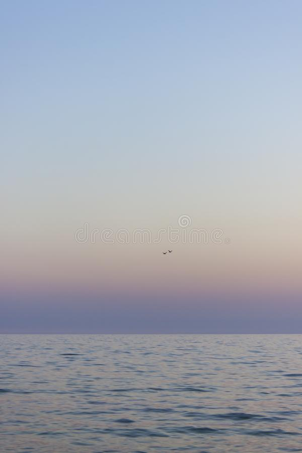 Two seagulls fly over the sea royalty free stock photo